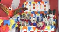 circuschickendog